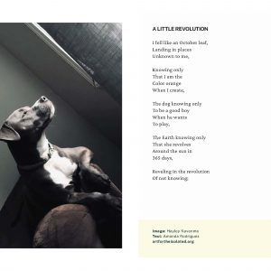 A Little Revolution poem and photo
